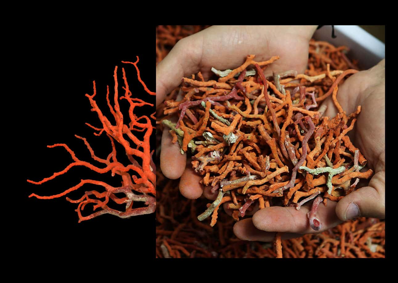 raw coral in the hands